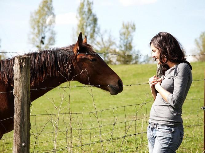 Bazadais - équitation