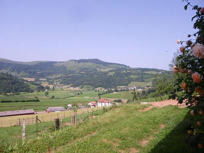 maison-lascor-jardin-hosta