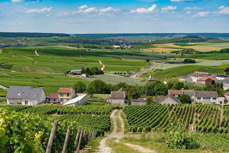 Jardin de vignes et belvédère de Cramant