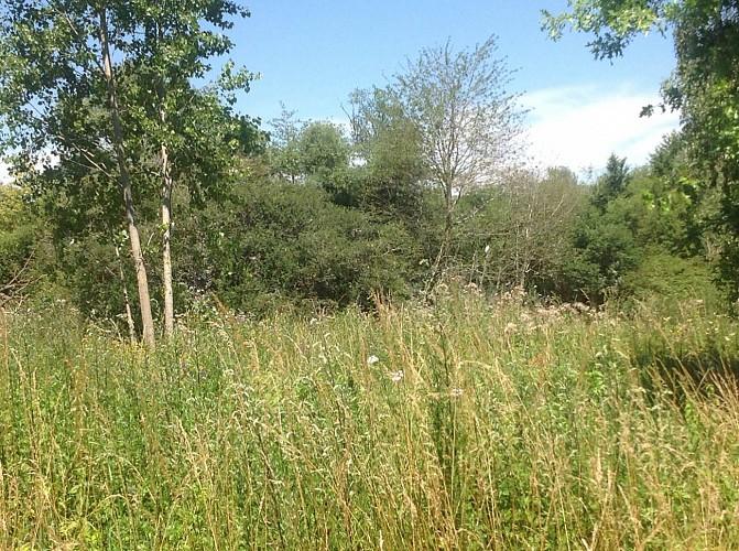 Prairie et étangs - les papillons et les criquets - les batraciens - les oiseaux