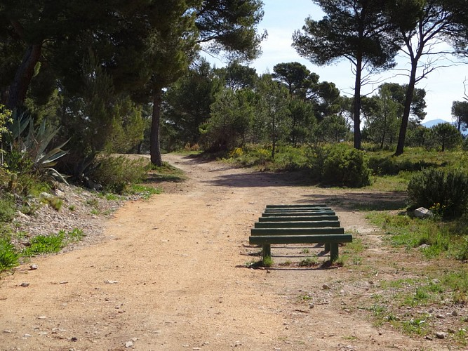 Fitness Trail, Defends Forest