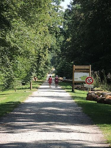 Gouffern's Forest