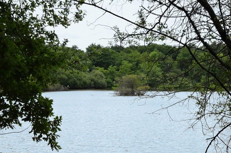 Vannes sur Cosson étang