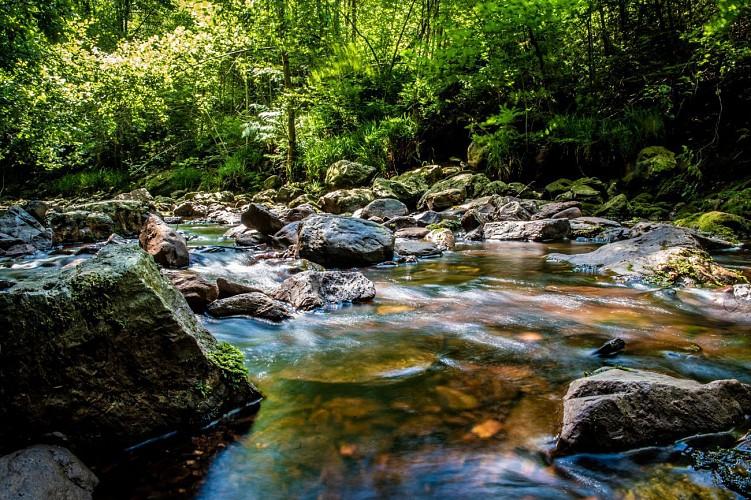 La Hoëgne, du ruisselet à la rivière