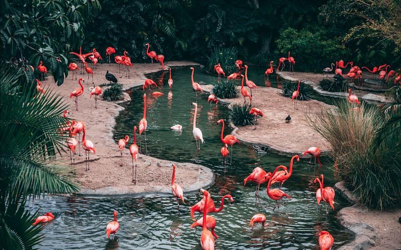 Super Saver Combo: Jurong Bird Park + Night Safari