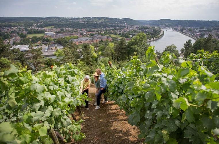 Wijngaard Le Clos des Prébendiers