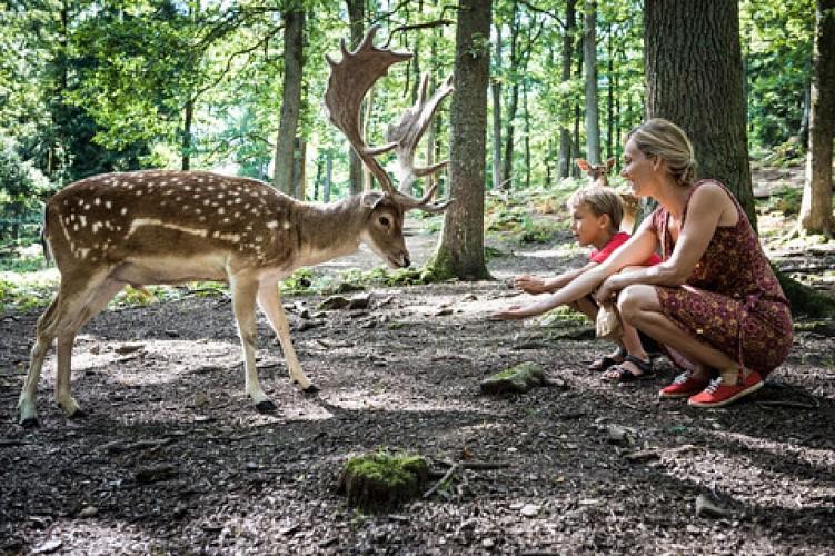 Wildpark van Saint-Hubert