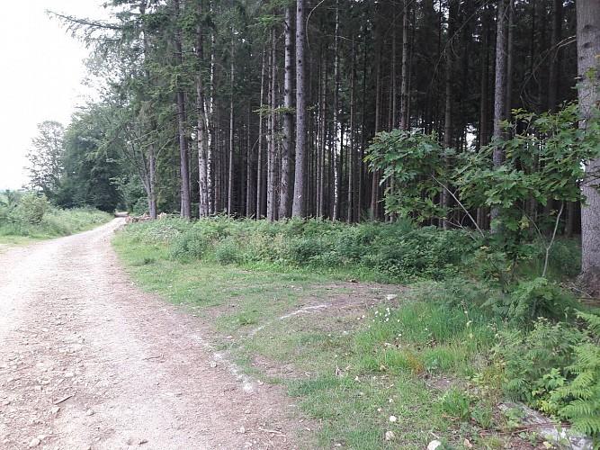 Premier accès dans le bois