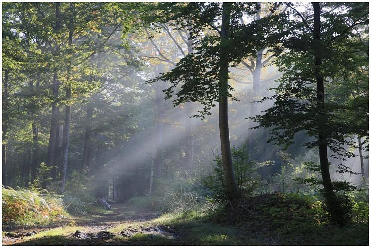 Forêt de Saint Maurice