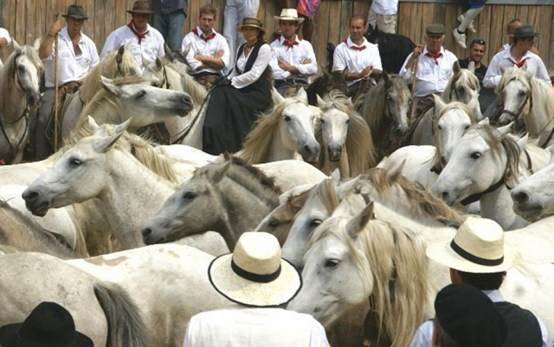 Tradition Camarguaise