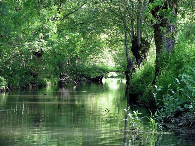 Une conche, voie d'eau du marais mouillé