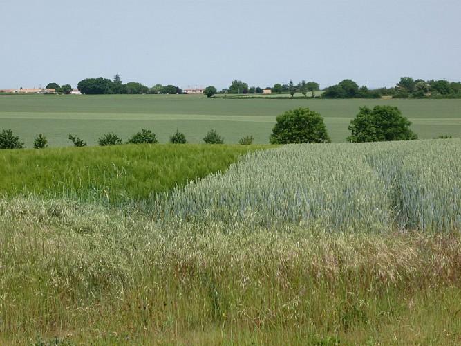 La plaine de Saint-Rémy