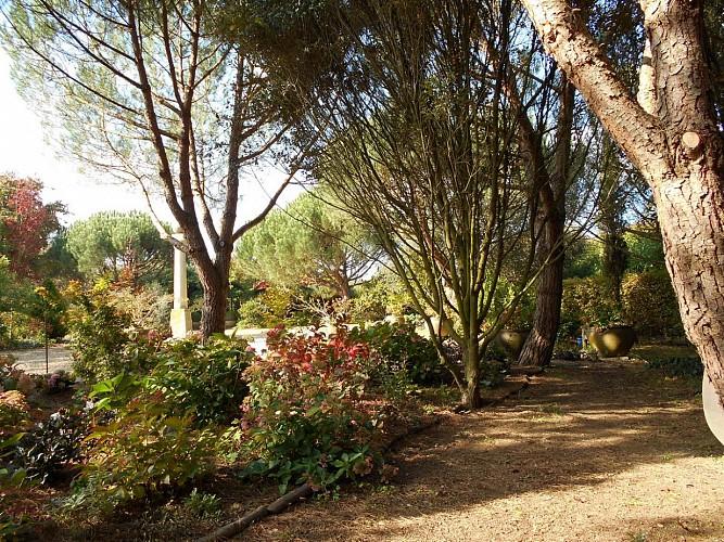 jardin-cistus-7