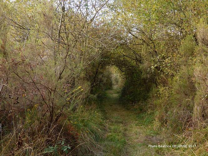 Photos-Bea-des-Landes-de-l-Hopiteau--1-