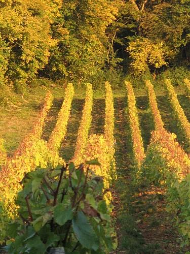 vignobles cotes de la charite