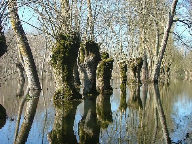 Paysage du marais mouillé