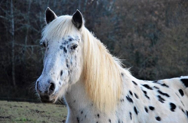 Cheval balade poney Dordogne Périgord Bastides enfant
