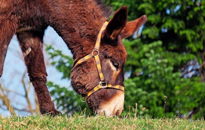 donkey-1268897-960-720