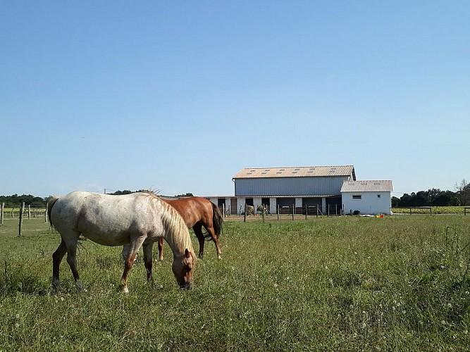 Centre équestre La Houn - prairie