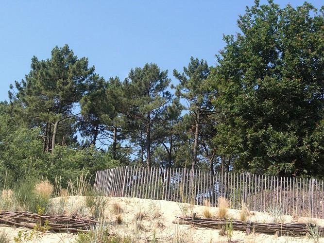 Parcours orientation-Labenne-OTI Landes Atlantique Sud