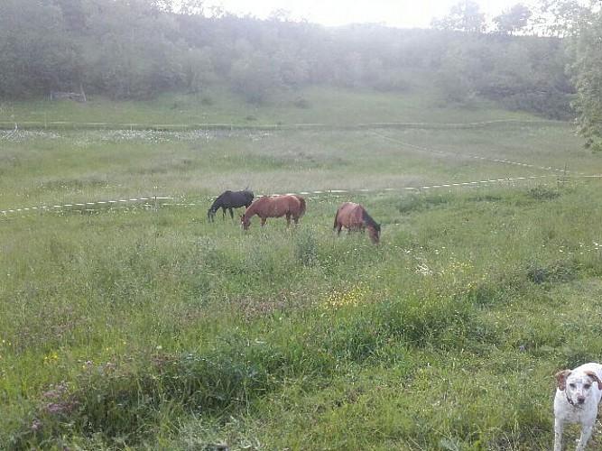 st-caprais-equitation-destination-agen-tourisme