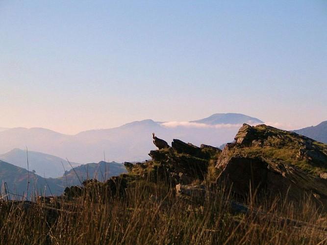 Accompagnateur montagne Daniel Hargain - randonnées vautours - Saint Etienne de Baïgorry