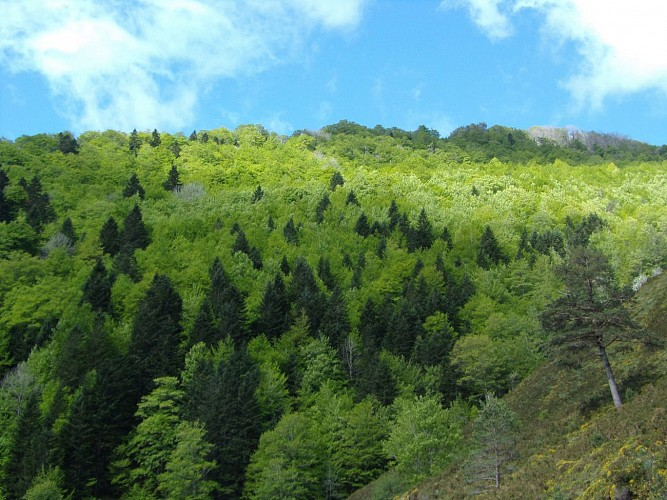 CPIE Pays Basque - foret-dIraty