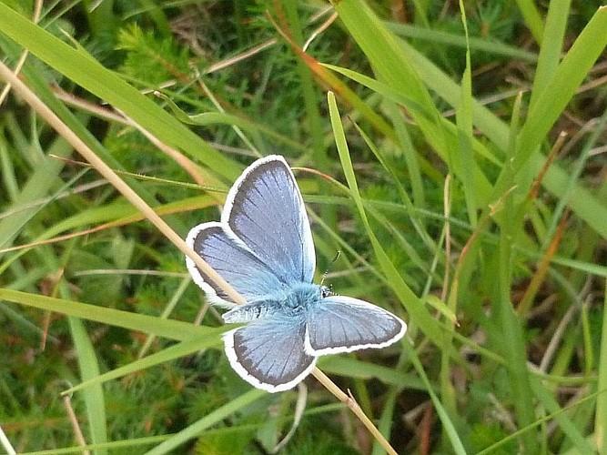 CPIE Pays Basque - papillon
