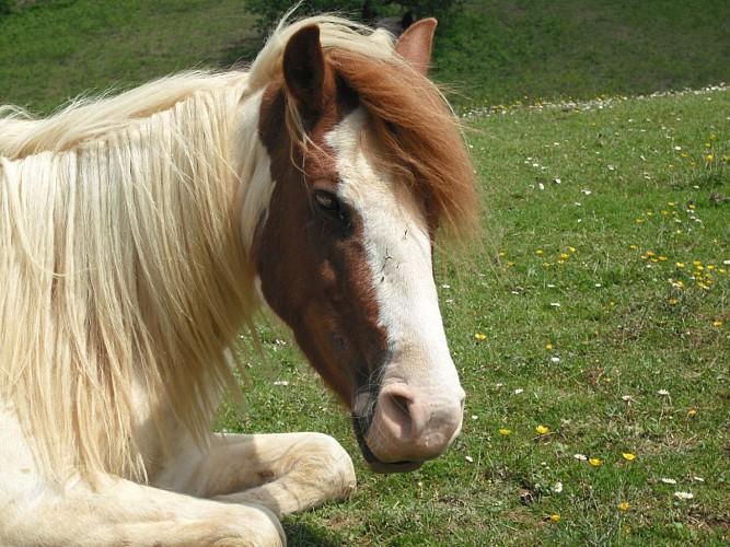 parc_animalier_etxola_poney