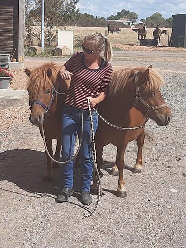 club hippique argentonnais poneys-internet.jpg_1