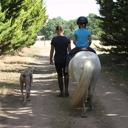 club hippique argentonnais cheval-internet.jpg_3