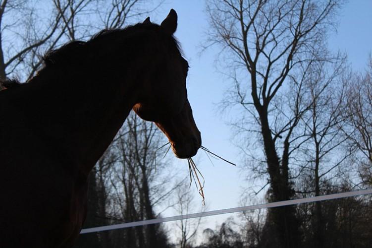 Un cheval du centre équestre