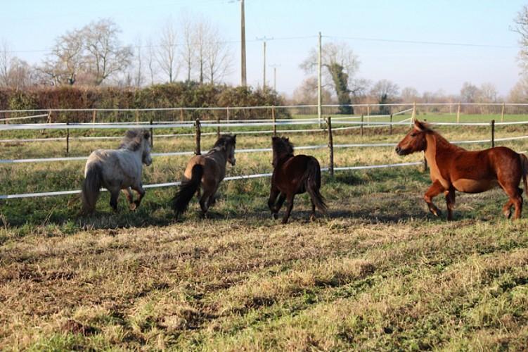 Les poneys du centre équestre