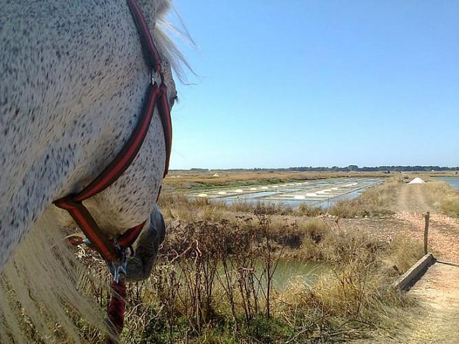 Promenade dans les marais salants