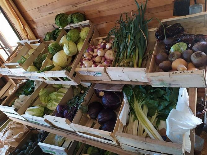 jardin-dognon-legumes