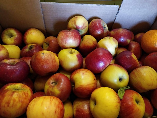 jardin-dognon-pommes