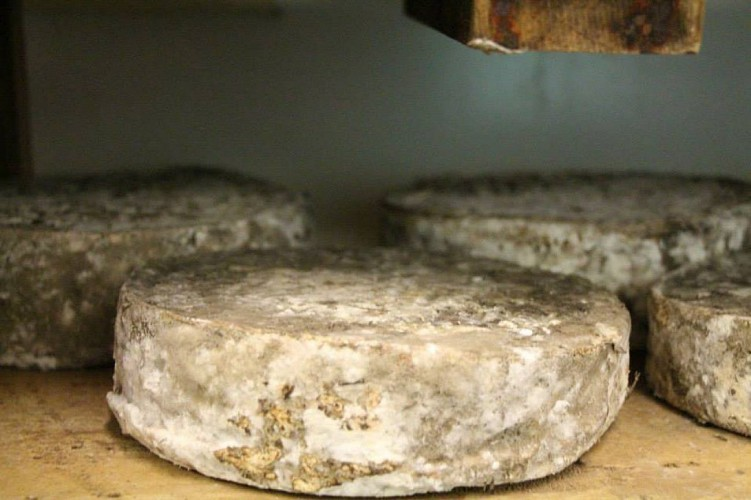 fromagerie-d-audrix-Bounichou--2-