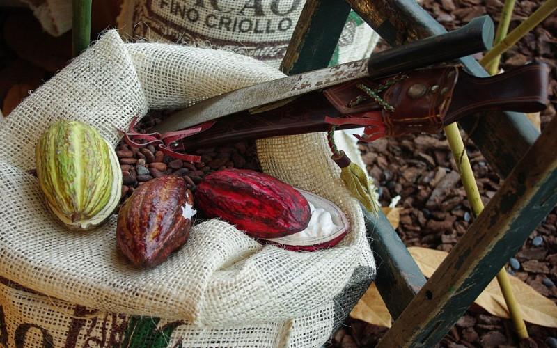 Chocolaterie-Puyodebat---OT-Cambo--98--6