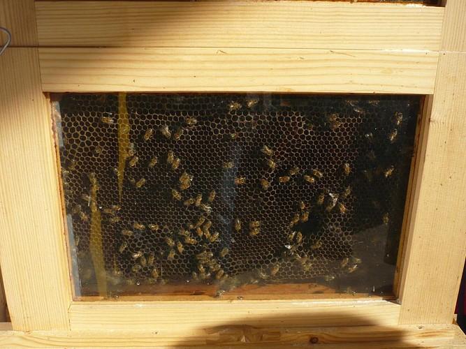 La ruche vitrée de la Miellerie de Surimeau à Niort