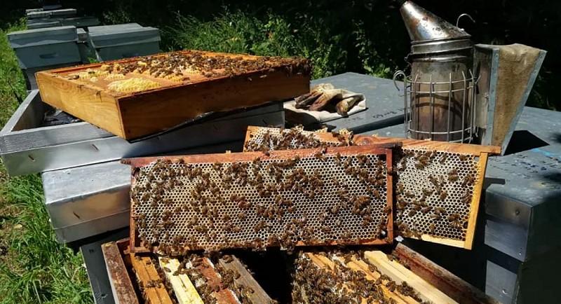 Miellerie de Titelle - ruches