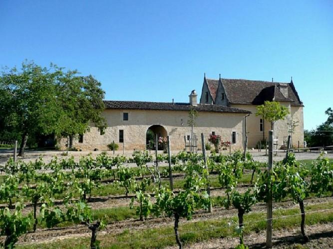 chateau la loubière vignes