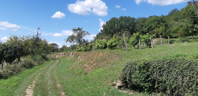 Sous les vignes