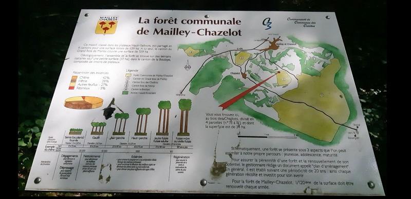 La forêt de Mailley-Chazelot